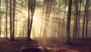 Le bois, un matériau renouvelable, toujours plus abondant