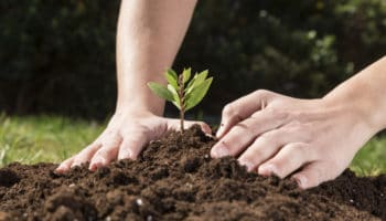 Printemps : qu'il est bon de s'occuper de son jardin !