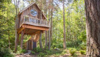 Du rêve de l'enfance au monde adulte : La construction de maisons dans les arbres est un business