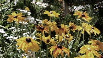 Sécheresse : des solutions pour le jardin