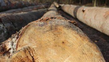 L'avantage d'une maison en bois : des matériaux naturels