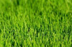 Terrain à Herbignac 44410 260m2 33800 € - AFRO-18-12-14-59