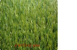 Terrain à Erquy 22430 1233m2 125000 € - YLM-19-07-09-9