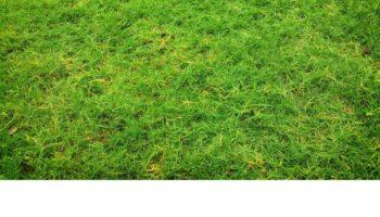 Terrain à Bessières 31660 535m2 77000 € - SKERG-20-02-13-1