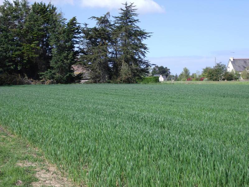 Terrain à Saint Carné 22100 780m2 35000 € - KRIB-19-10-09-7