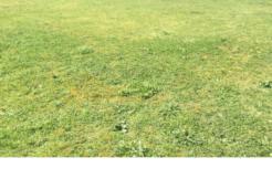 Terrain à Gradignan 33170 585m2 255000 € - CDUS-20-02-08-11