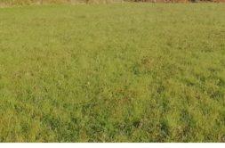 Terrain à Pordic 22590 423m2 56875 € - YLM-20-10-29-7