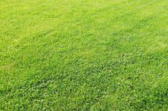 Terrain à Plaine-Haute 22800 506m2 31500 € - YLM-21-04-14-6
